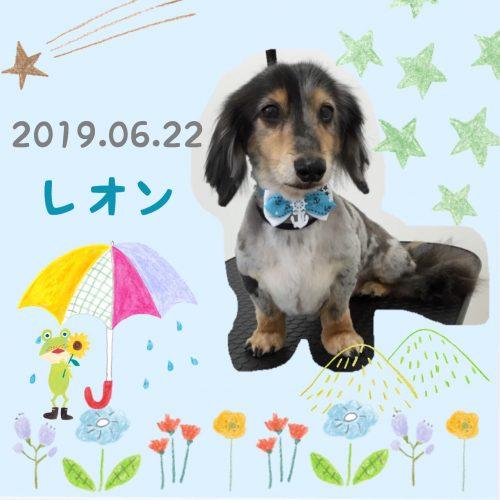 2019.06.22冨沢レオン