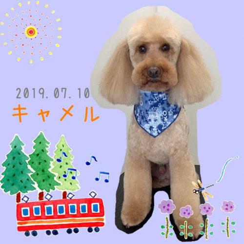 2019.07.10齋藤キャメル」