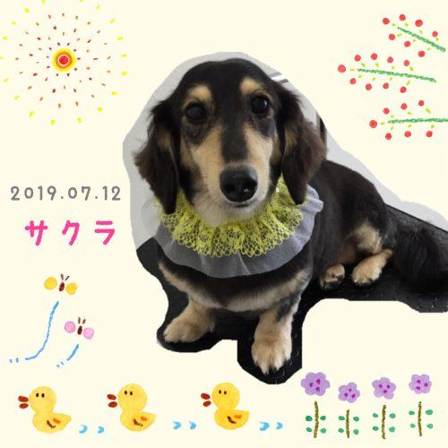 2019.07.12桐村サクラ
